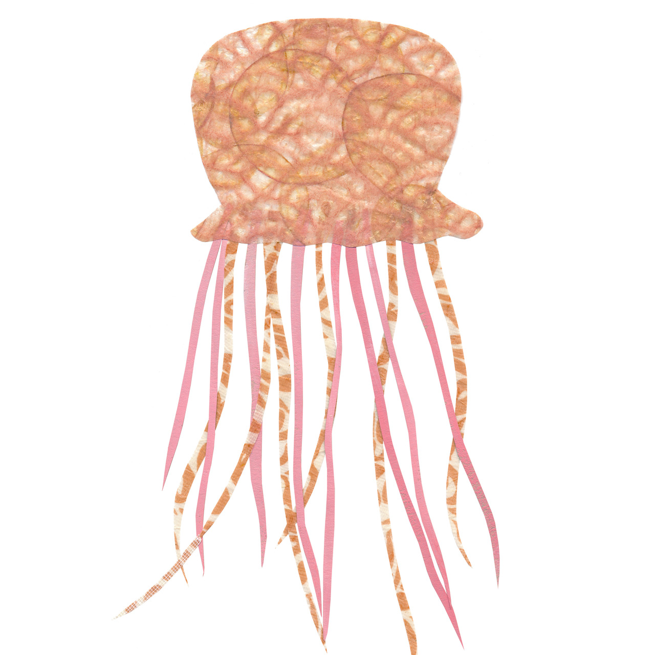 an animal a day    J  for jellyfish