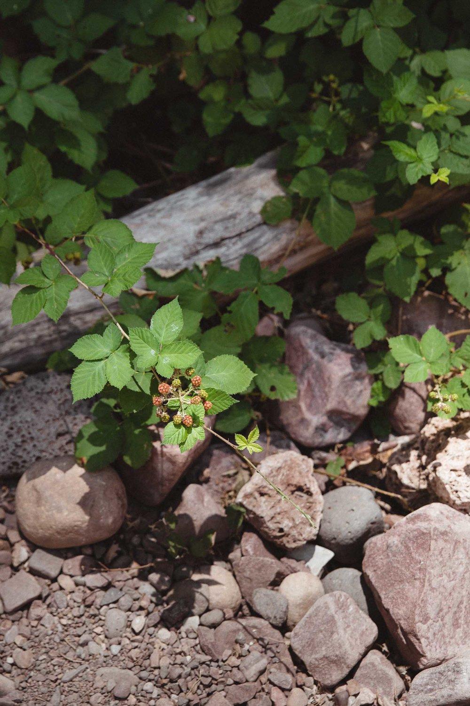 wilderness_180803_020_2500p.jpg