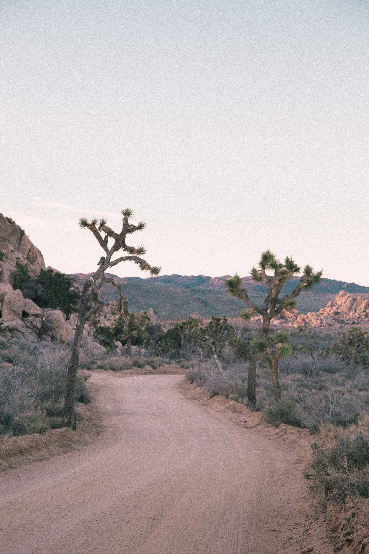 wilderness_180803_022_2500p.jpg