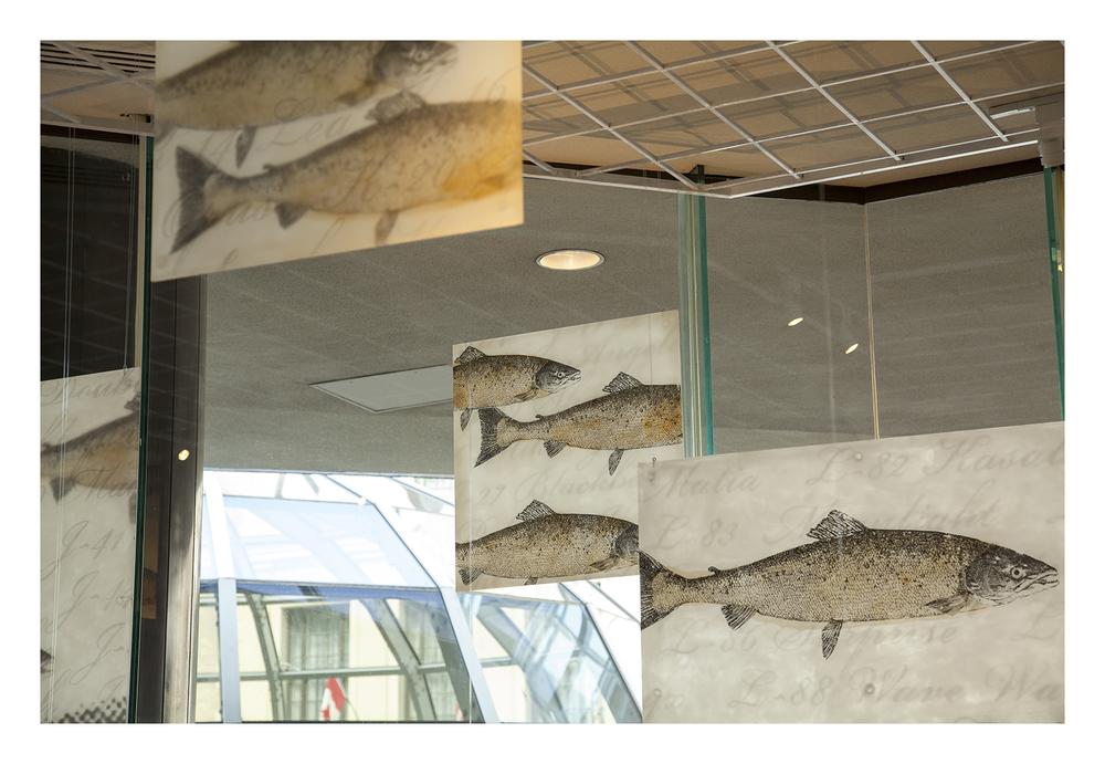 web_salmon_gustafson_06.jpg