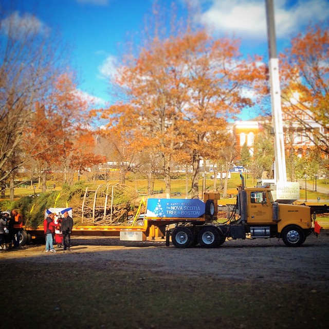 The annual Nova Scotia Tree for Boston has arrived in the Common this morning.