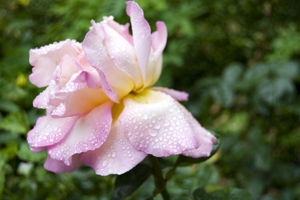 flower 02.jpg