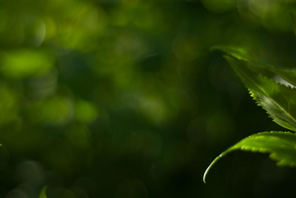 green 01.jpg