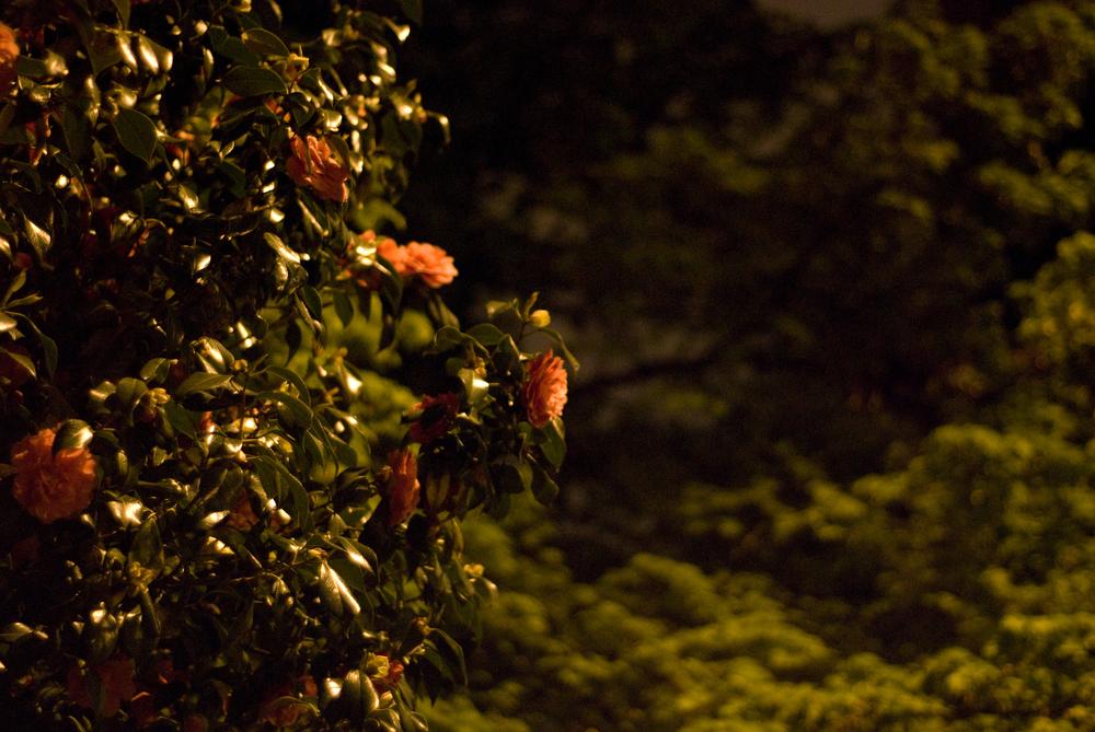 night flower tree.jpg