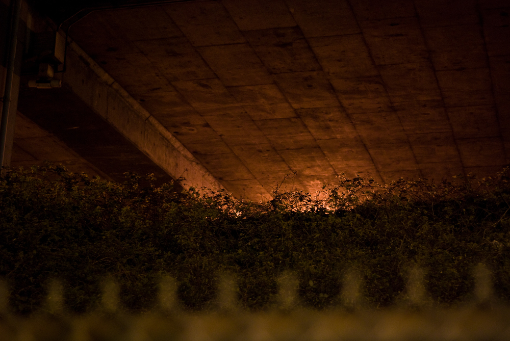 under the freeway.jpg