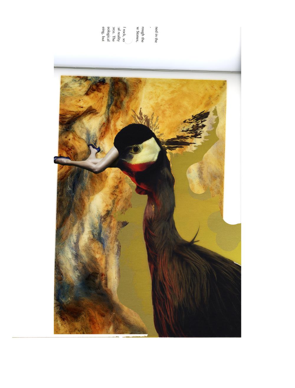 turner bird large.jpg