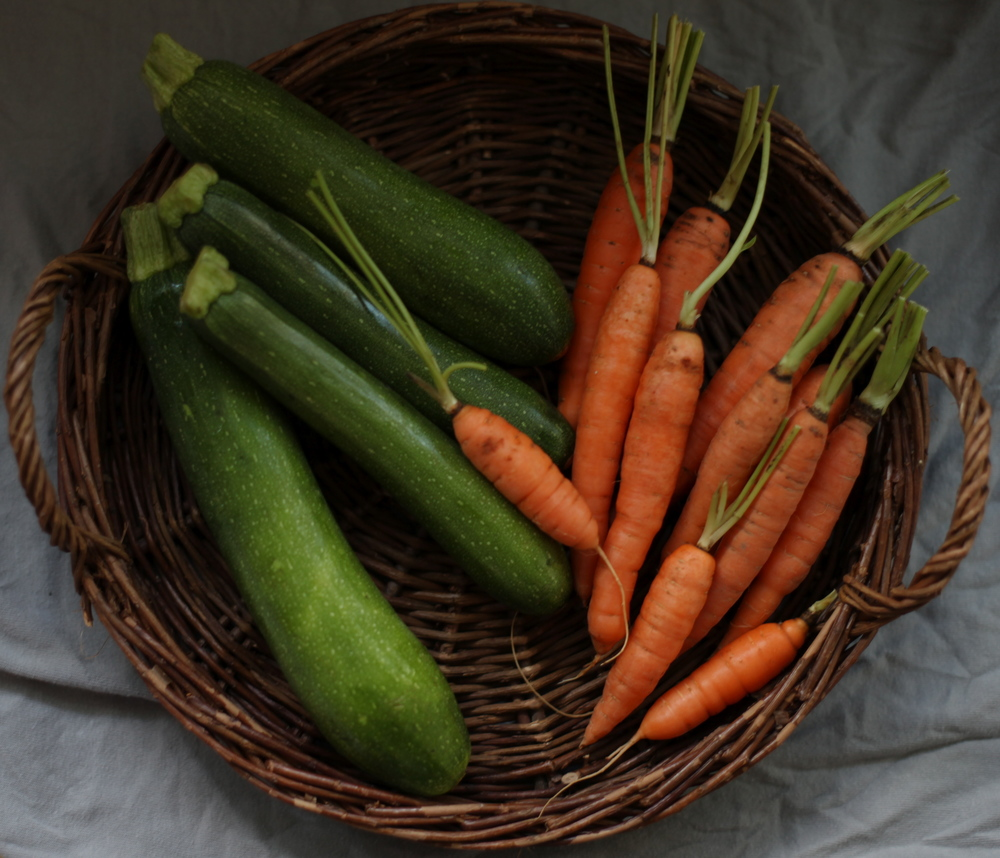 Fresh and local zucchini and carrots