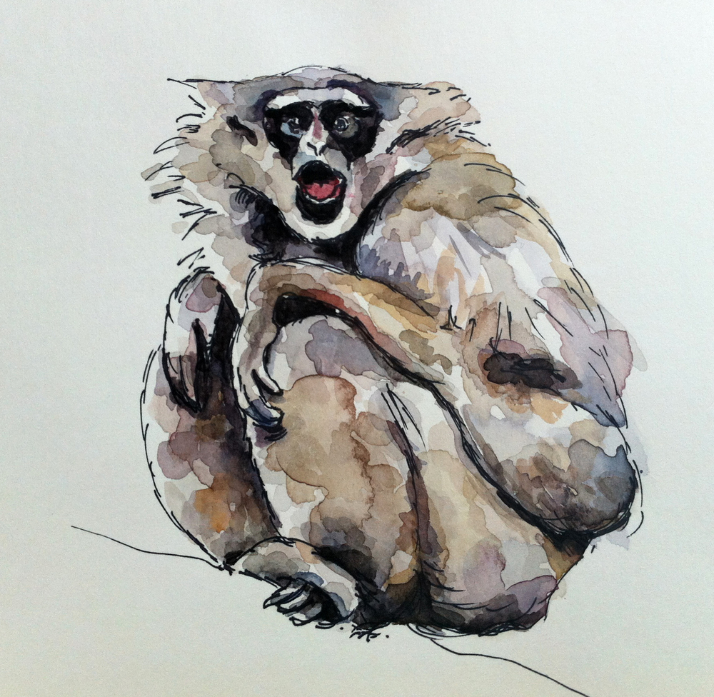 Lone Gibbon