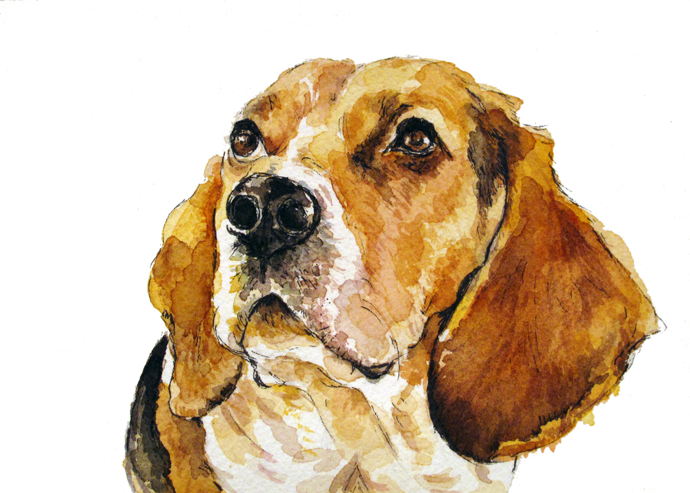 Webster, the loveable beagle