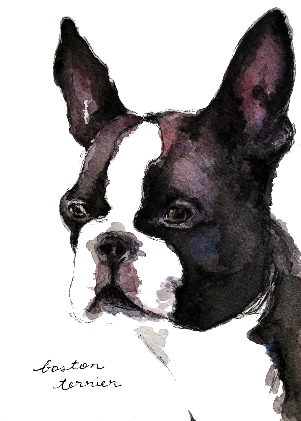 5x7-bostonterrier-2.jpg