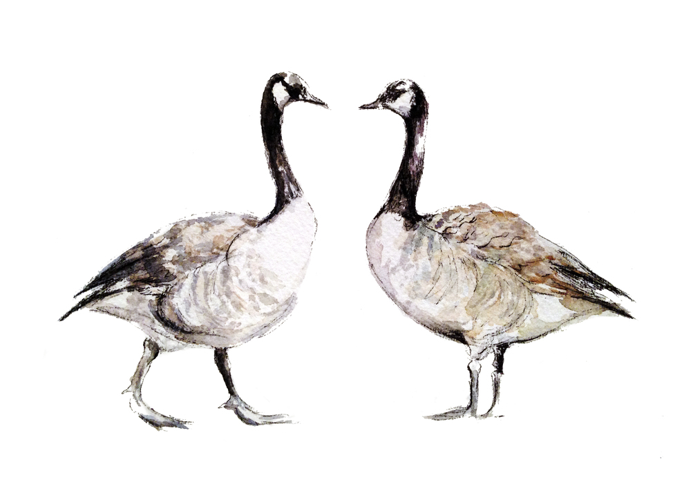 Canada Geese (ORIGINAL DONATED)