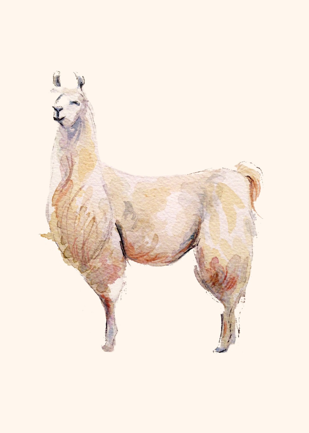 Llama(ORIGINAL SOLD)