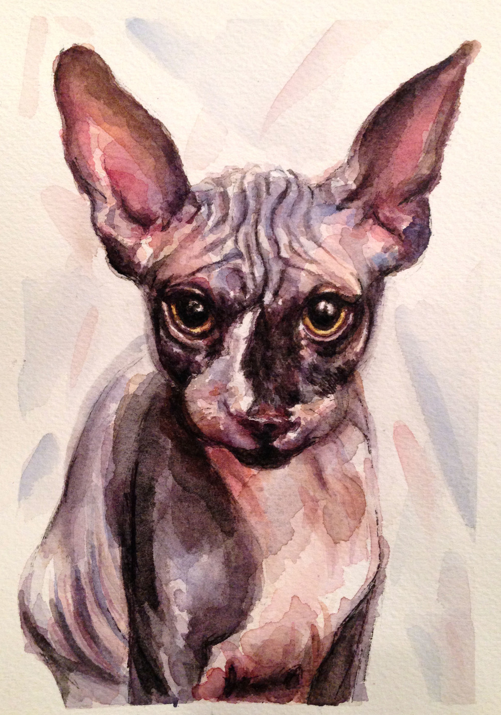 Kyle the hairless cat