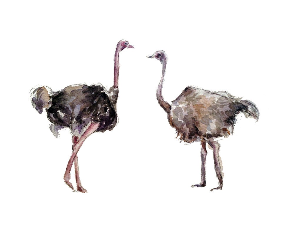 Ostrich Love (ORIGINAL SOLD)
