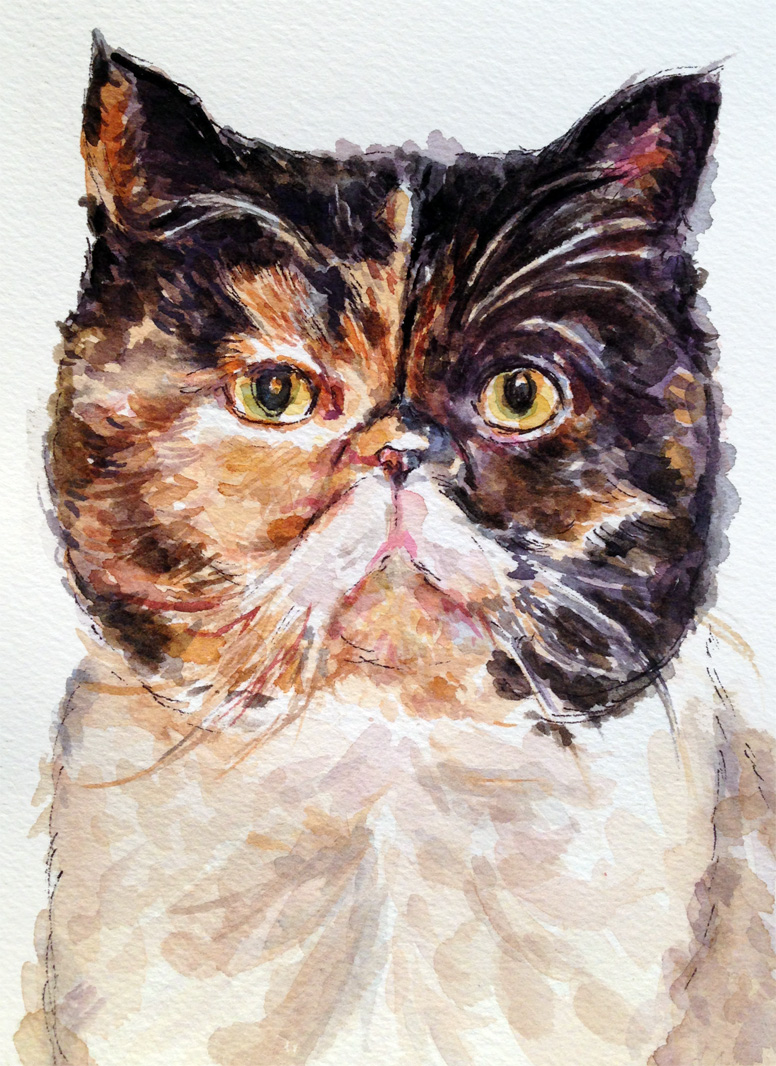 Pudge, the celebrity cat