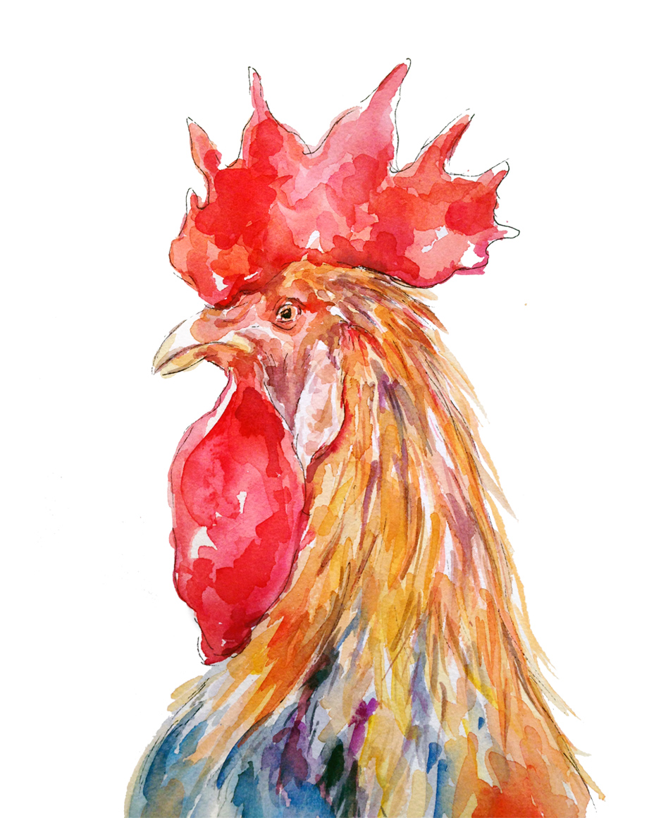 Colourful Rooster