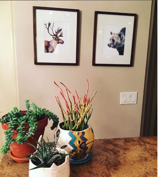 The caribou and grizzly displayed beautifully in Shannon's home!