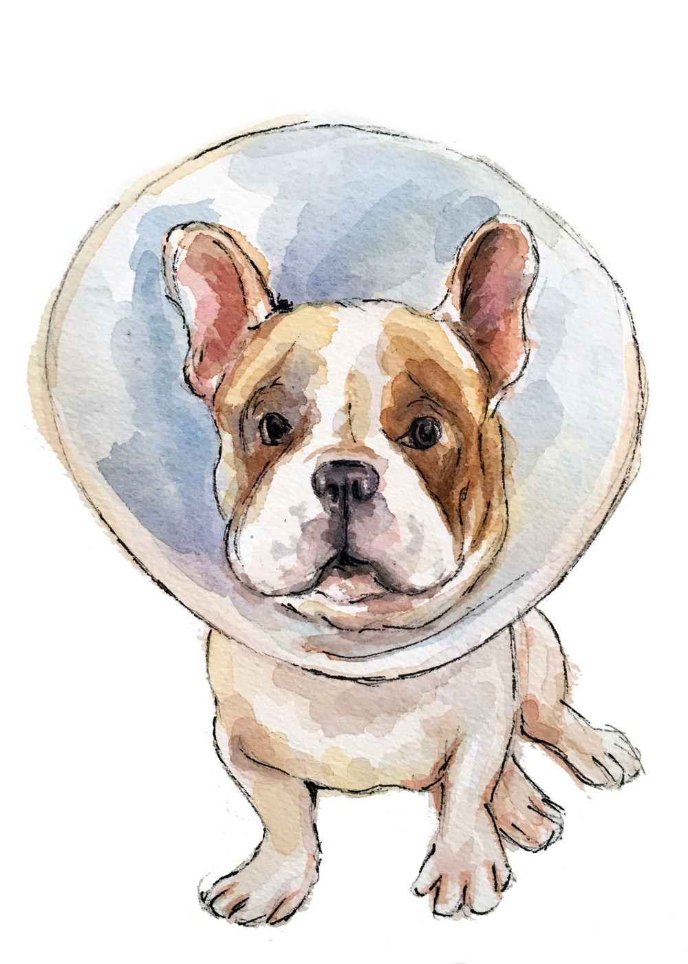 Frenchie-cone.jpg
