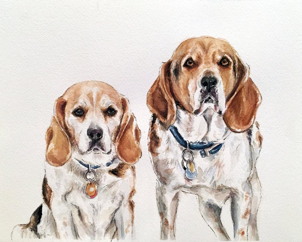 Beagle pair