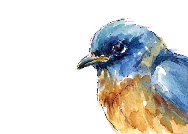 bluebird-5x7-web.jpg