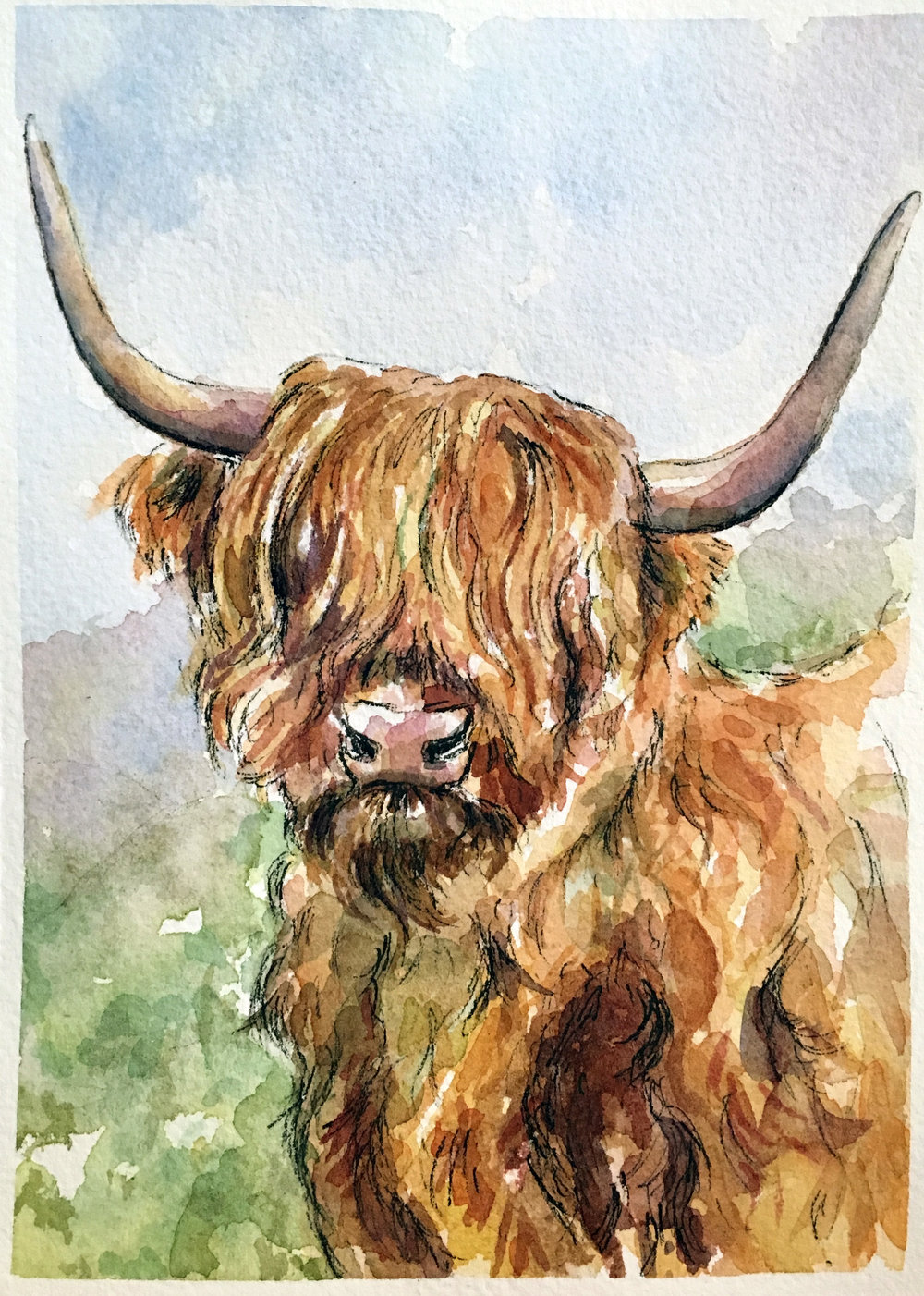 Custom highland coo