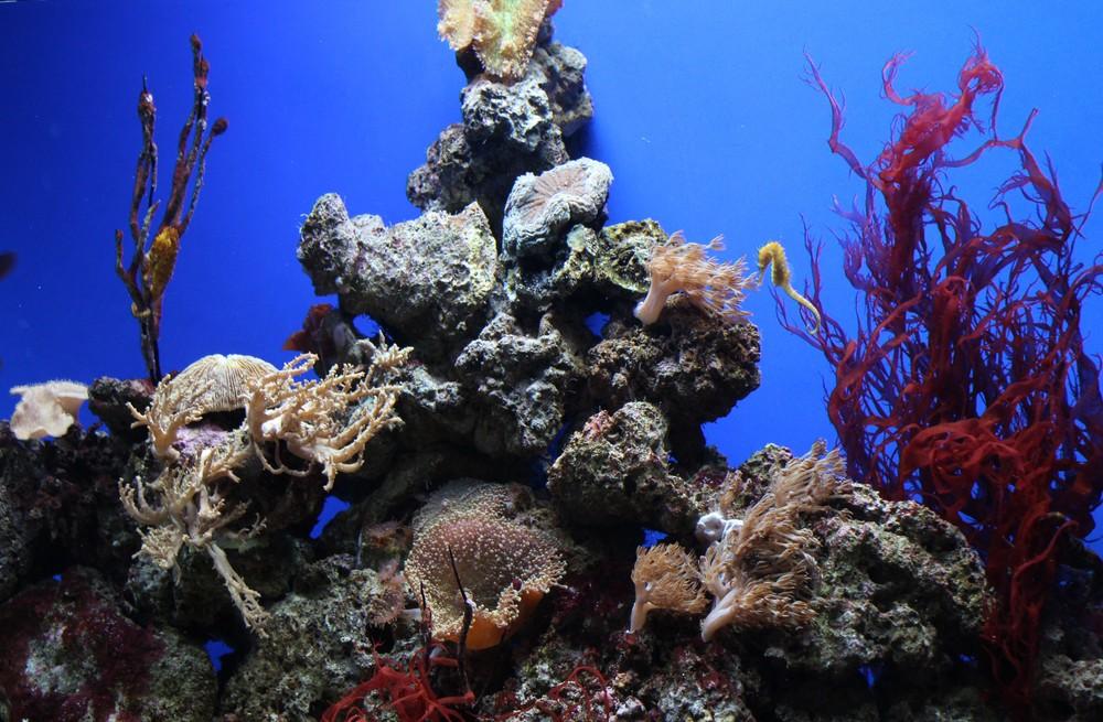 aquarium (1)[1].jpg