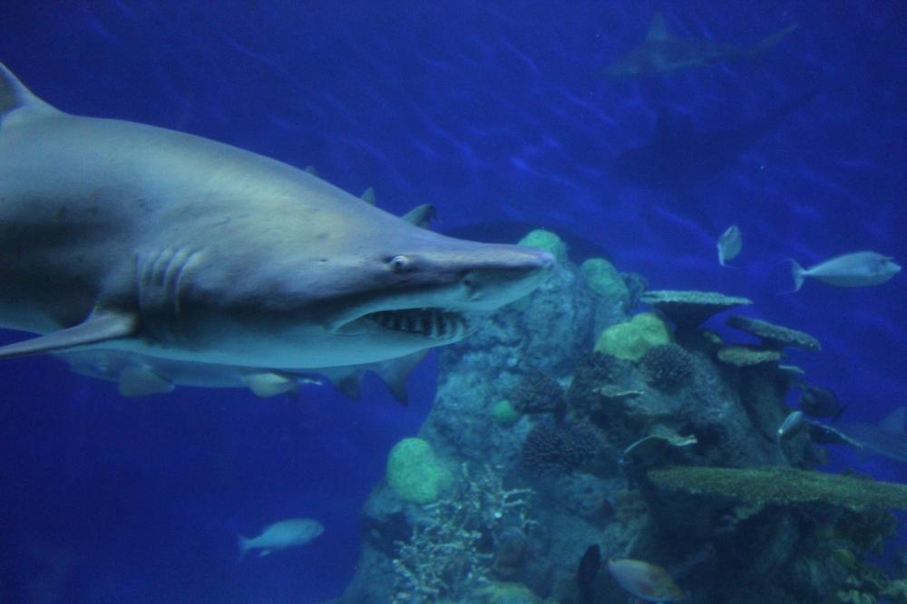 aquarium (2)[1][1].jpg