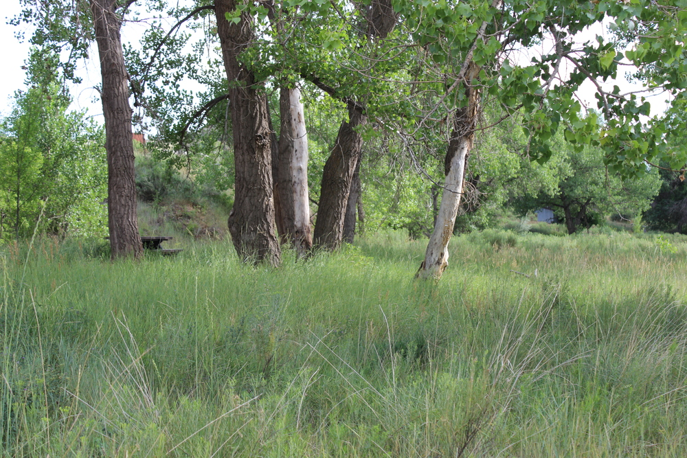 meadow1[1].jpg