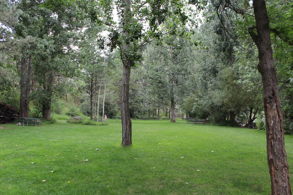 meadow2[1].jpg