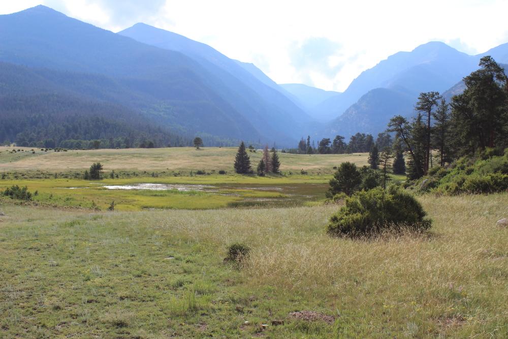 meadow3[1].jpg