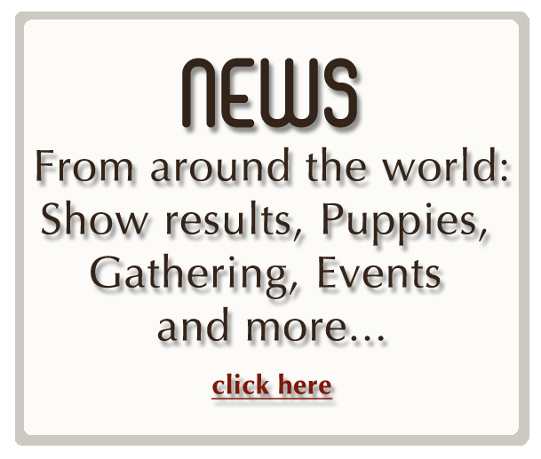 news6.jpg