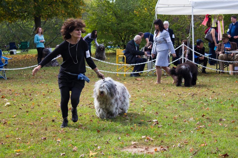 20131012 - DogShow-18.jpg