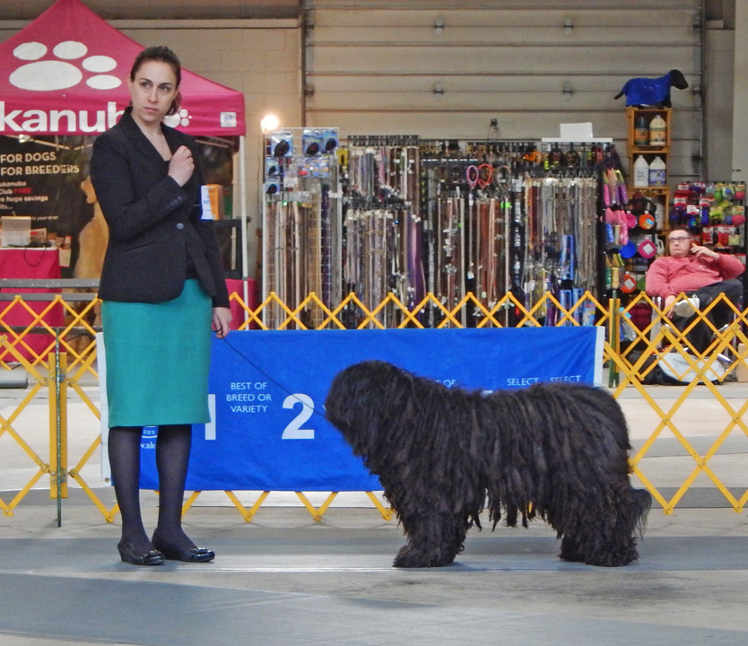 BOB Amira and her owner /handler Jeanine  Dell Orfano