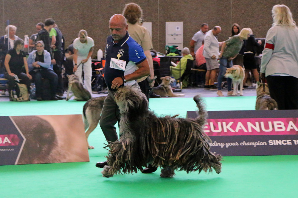 Bibli Dei Lupercali:  WDS - CACIB, CAC, BOB World Dog Winner 2018