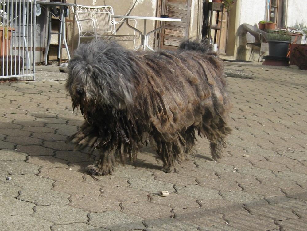 Miep, Cane dell Alpi's Minerva