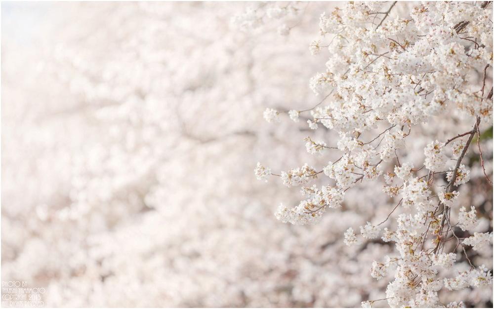 primavera Sn0 pan