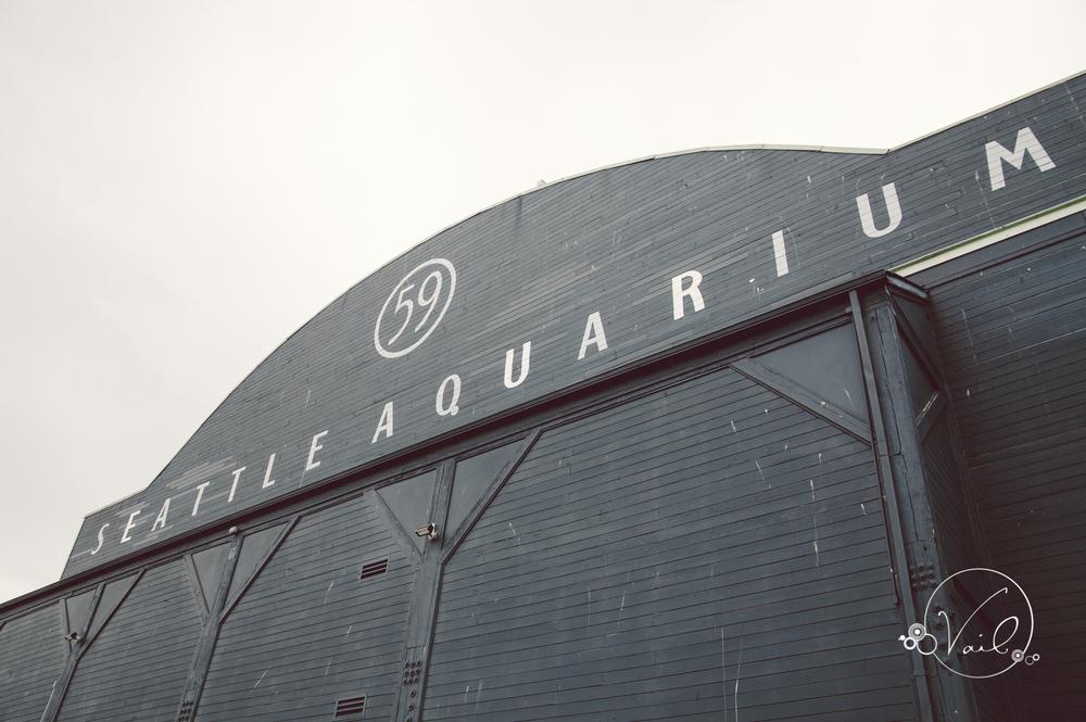 Seattle Aquarium, Seattle Center, The Great Wheel, Seattle Wedding day-53.jpg