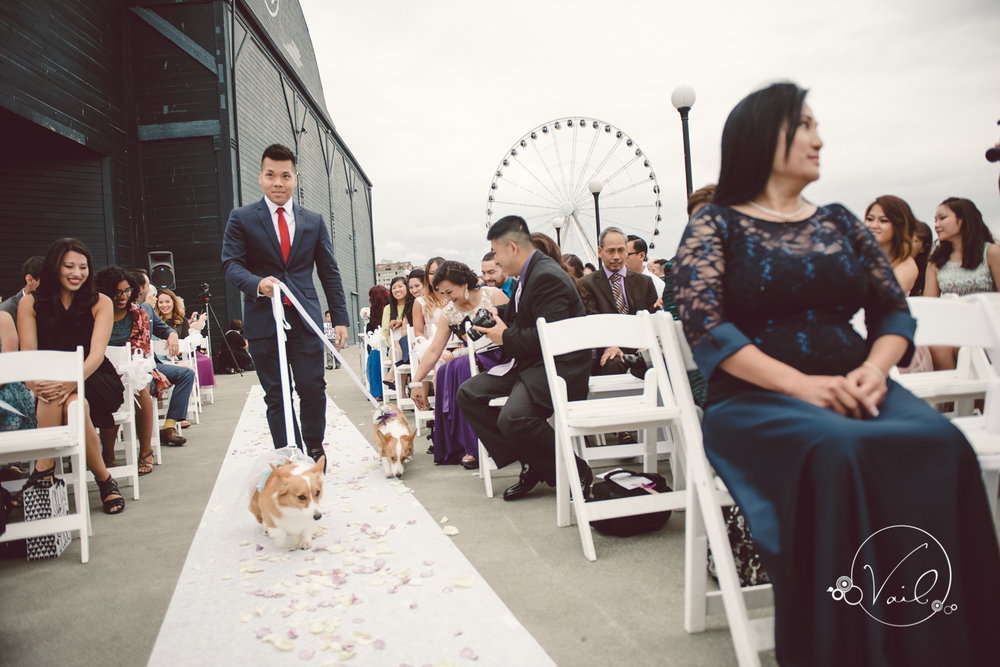 Seattle Aquarium, Seattle Center, The Great Wheel, Seattle Wedding day-59.jpg