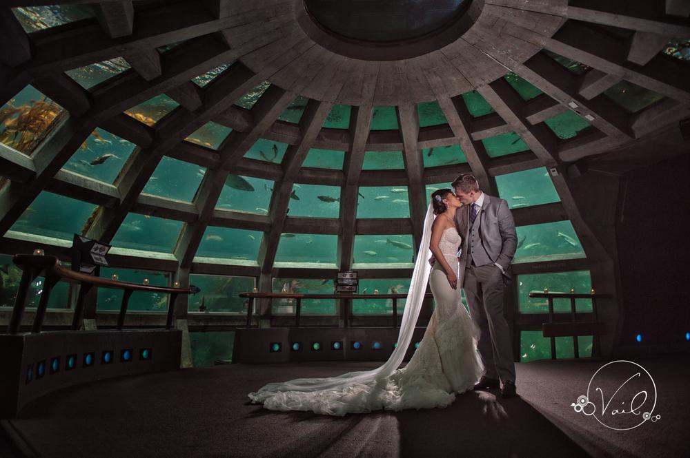 Seattle Aquarium, Seattle Center, The Great Wheel, Seattle Wedding day-73.jpg