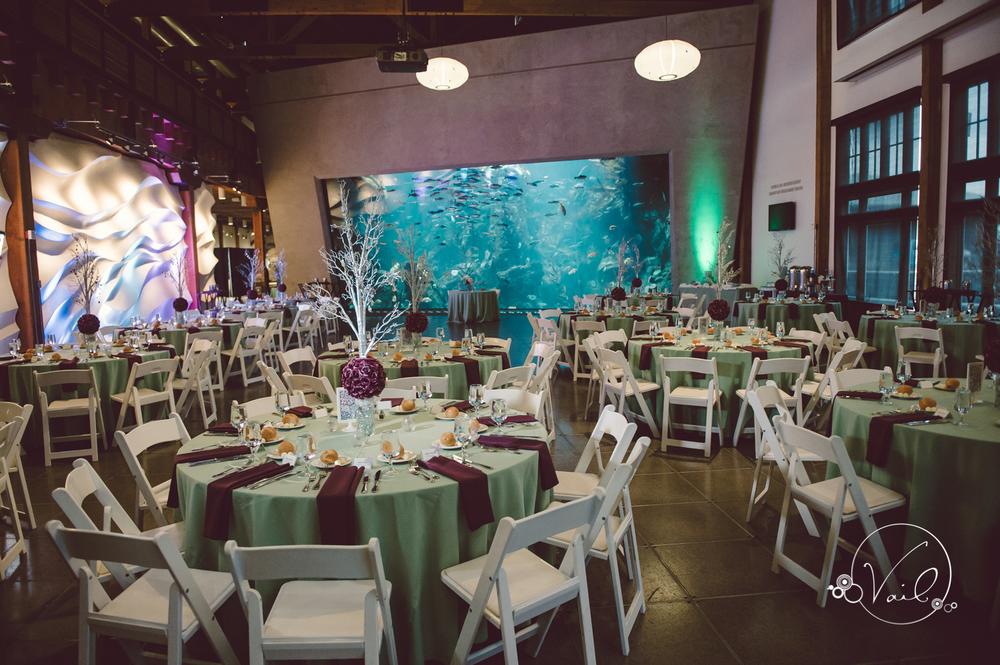 Seattle Aquarium, Seattle Center, The Great Wheel, Seattle Wedding day-76.jpg