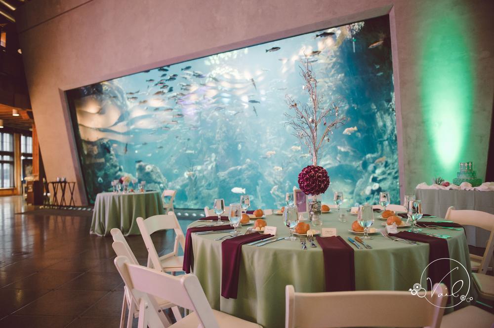 Seattle Aquarium, Seattle Center, The Great Wheel, Seattle Wedding day-78.jpg