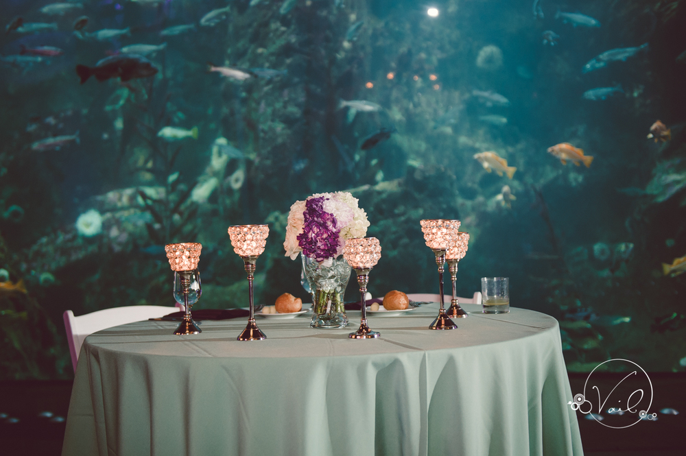 Seattle Aquarium, Seattle Center, The Great Wheel, Seattle Wedding day-82.jpg