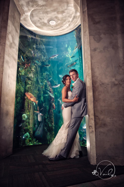 Seattle Aquarium, Seattle Center, The Great Wheel, Seattle Wedding day-90.jpg