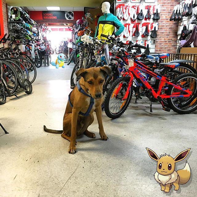 Ahhhhh! Pokémons bei uns im Laden gesichtet👏🏼😬 kommt vorbei und holt sie euch;) #pokemongo