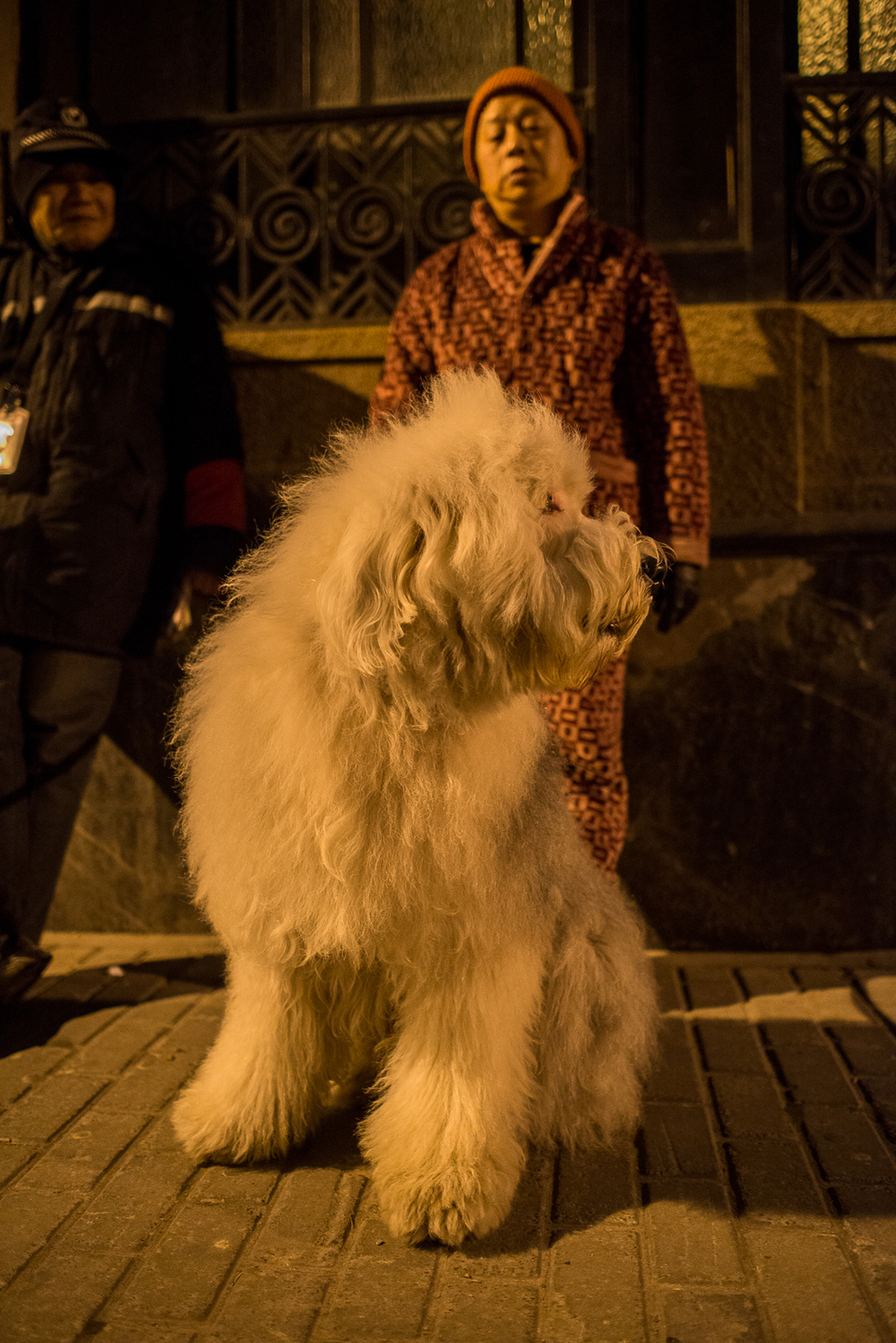 A night walk in Shanghai. This dog was about the same size as me.