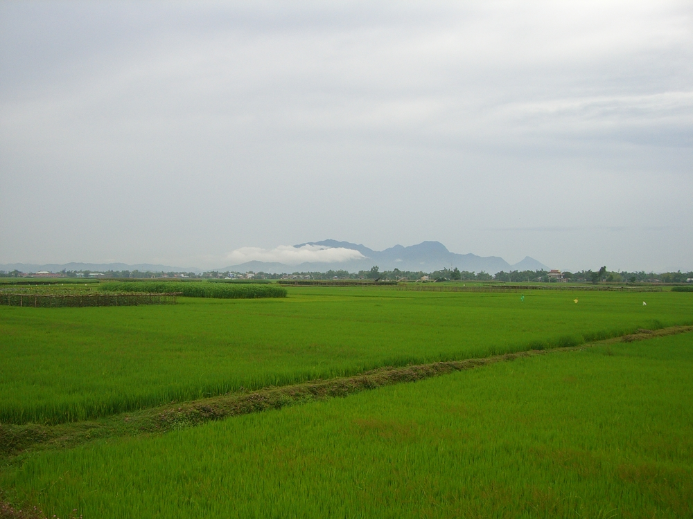 green rice paddies and Laos mountains in the distance