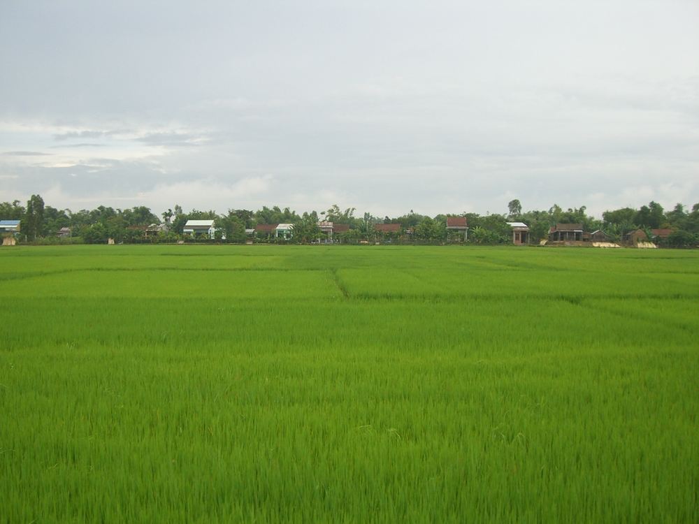 rice fields and houses on a bike ride through rural Hoi An