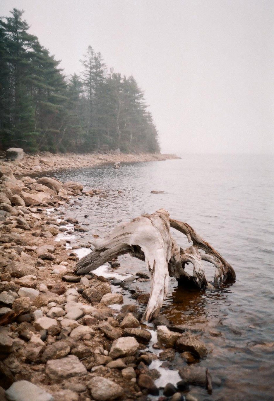 Driftwood on the coast