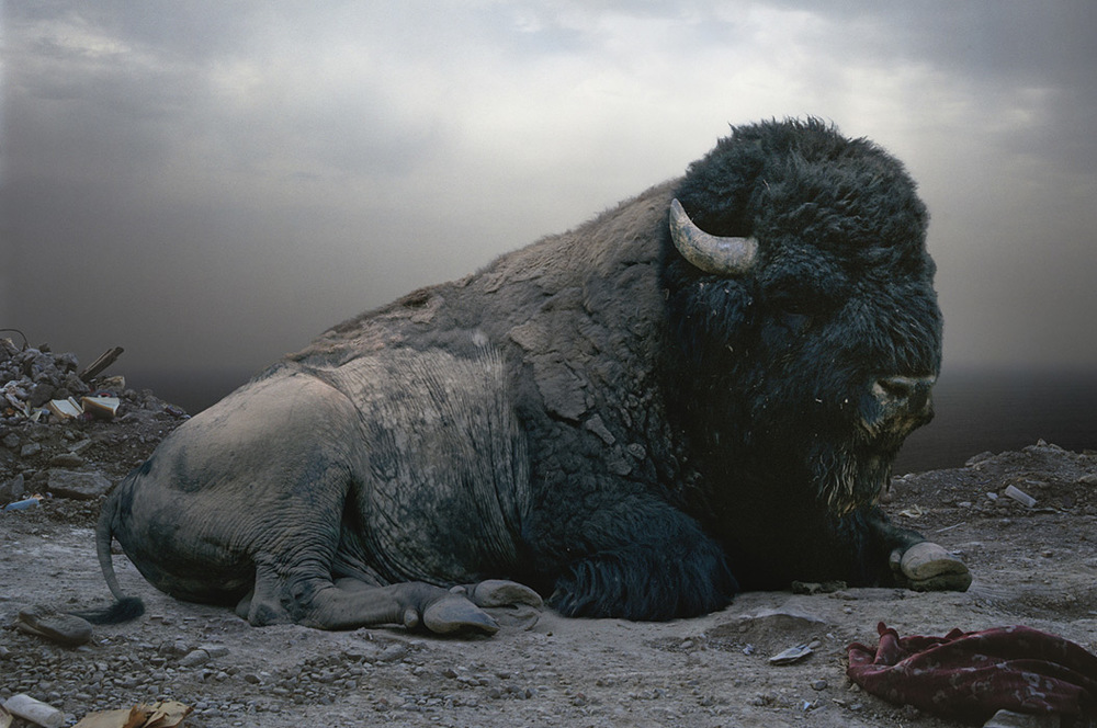 Until the Kingdom Comes by Simen Johan