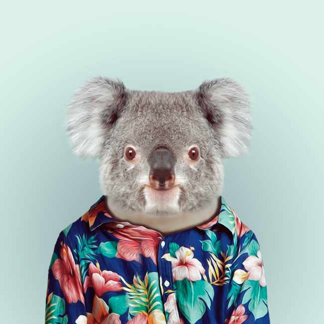 koala-yago-partal-zoo-portraits.jpg